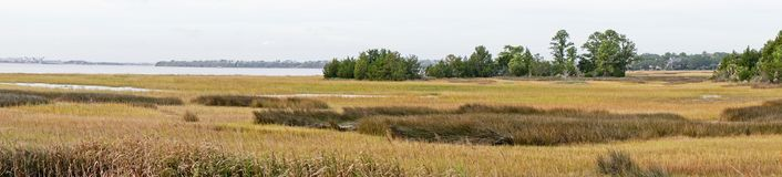 Panoramic view of marsh. Near Charleston South Carolina with brown and green grass with a small island in the background Royalty Free Stock Photography