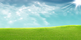 Panoramic view of  meadow. Panoramic view of green meadow Royalty Free Stock Image