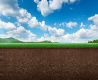 Panoramic view of a meadow Stock Images