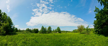 Panoramic view of the meadow at summer season. Royalty Free Stock Photo