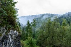 Panoramic view of misty forest. Far horizon Stock Image