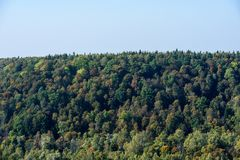 Panoramic view of misty forest. Far horizon Royalty Free Stock Image