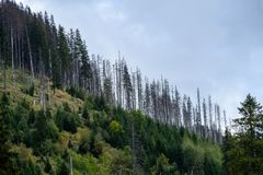 Panoramic view of misty forest. Far horizon Royalty Free Stock Photos