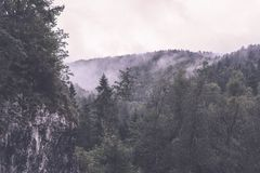 Panoramic view of misty forest - vintage retro effect. Panoramic view of misty forest. far horizon. - vintage retro effect Royalty Free Stock Photo