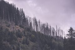 Panoramic view of misty forest - vintage retro effect. Panoramic view of misty forest. far horizon. - vintage retro effect Royalty Free Stock Images