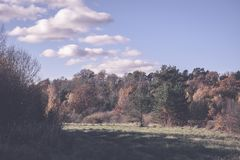 Panoramic view of misty forest - vintage retro effect. Panoramic view of misty forest. far horizon. - vintage retro effect Stock Image