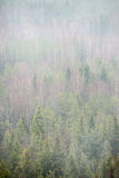 Panoramic view of misty rain forest Stock Photo