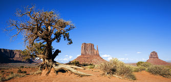 Panoramic view of Monument Valley and tree Stock Images
