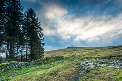 Panoramic view on moorland in Devon, UK Stock Photos