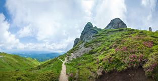 Panoramic view of Mount Ciucas on summer with wild rhododendron royalty free stock images