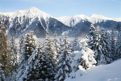 Panoramic view of mountain forest Stock Images
