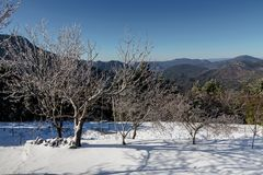 Panoramic view of the mountains. Winter landscape. Panoramic view of the mountains in the distance, a spruces and ice-covered trees on a winter evening at sunset Royalty Free Stock Photo