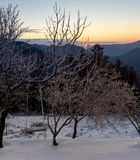 Panoramic view of the mountains. Winter landscape. Panoramic view of the mountains in the distance, a spruces and ice-covered trees on a winter evening at sunset Stock Image