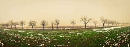 Panoramic view of multiple trees. Foggy weather and snow over the fresh grass Royalty Free Stock Photography