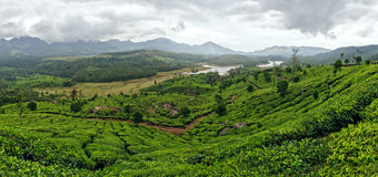 Panoramic view in Munnar in western Ghats, Kerala Royalty Free Stock Photos