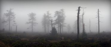 Panoramic View of Mystical Silhouettes of Trees Stock Photos