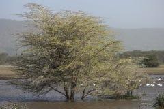 Panoramic view of National Park Lake Manyara Stock Image