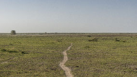 Panoramic view of National Park Lake Manyara Royalty Free Stock Image