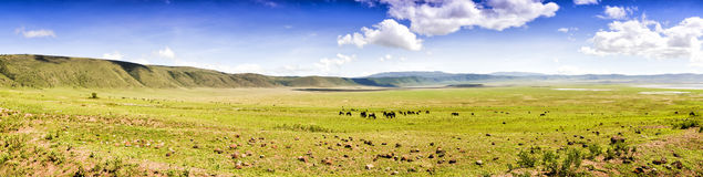 Panoramic View of Ngorongoro Stock Images