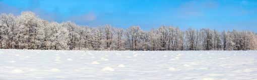 The panoramic view with nice snowy trees, blue sky and textured snow. Winter landscape for leaflets Royalty Free Stock Image
