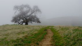 Lagoon Valley Park on a foggy day. Panoramic view of an oak tree in the rolling hills of Lagoon Valley Park in Vacaville, California, USA, featuring the fog and Royalty Free Stock Image