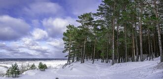 Free Panoramic View Of Pine Trees Forest Near Covered In Snow Sea Coast During Sunny Winter Day With Blue Sky With Clouds Stock Photos - 214227183