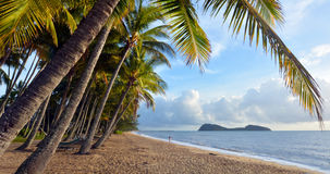 Panoramic view os Palm Cove sea shore at sunrise Queensland Aus royalty free stock photography