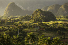 Panoramic view over landscape with mogotes in Vinales Valley ,Cu Royalty Free Stock Photos