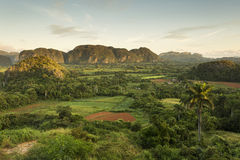 Panoramic view over landscape with mogotes in Vinales Valley ,Cu Stock Images