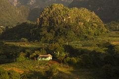 Panoramic view over landscape with mogotes in Vinales Valley ,Cu Royalty Free Stock Photo