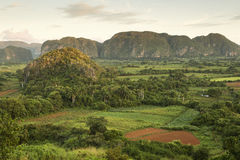 Panoramic view over landscape with mogotes in Vinales Valley ,Cu Stock Photography