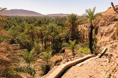 Panoramic view over oasis of date palms, Figuig, Morocco Stock Image