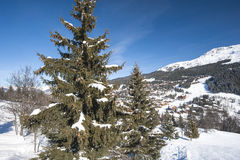 Panoramic view over a snowy slope with pine tree Royalty Free Stock Photos