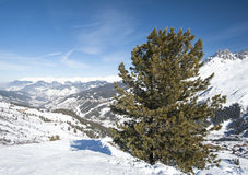 Panoramic view over a snowy slope with pine tree Stock Images