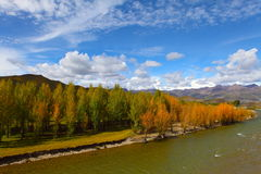 Autumn forest and mountains Stock Image