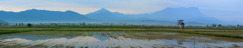 Panoramic view of a paddy field with mount Kinabalu at Sabah, Malaysia Stock Photos