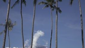 Panoramic view of a palm tree and mountains against the background of clouds on tropical the resort of Bali Indonesia. stock video
