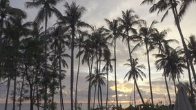 Panoramic view of a palm tree the sea and the pool on tropical the resort of Bali Indonesia stock footage