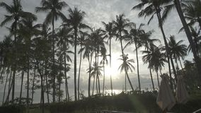 Panoramic view of a palm tree the sea and the pool on tropical the resort of Bali Indonesia.  stock footage