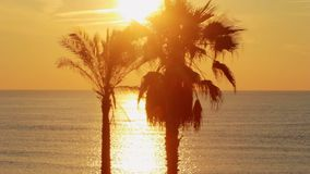 Panoramic view palm trees on background golden sunset in ocean on tropical beach. Panoramic view palm trees at golden sunset in ocean. Palm tree on tropical stock footage