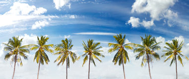 Panoramic view of palms and cloudscape. Royalty Free Stock Images