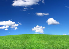 Panoramic view of peaceful grassland Royalty Free Stock Photography