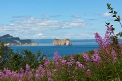 The pierced rock seen from Bonaventure Island in the foreground, purple wild flowers stock photo