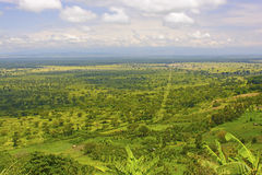 Panoramic View in the Plains of Africa Royalty Free Stock Photography