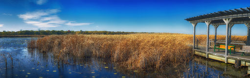 Panoramic view of Point Pelee national park boardwalk in the fal Royalty Free Stock Image