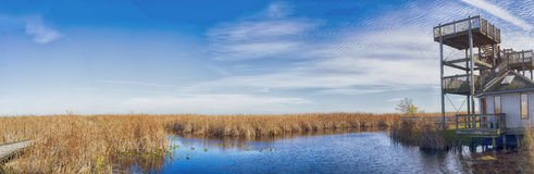 Panoramic view of Point Pelee national park boardwalk in the fal Stock Photography