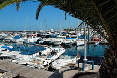 Panoramic view of the port Colon in Tenerife, Spain. Port Colon. The largest marine entertainment center in Tenerife Stock Image