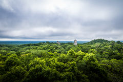 Panoramic view of rainforest and top of mayan temples at Tikal National Park - Guatemala Stock Images
