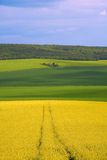 Panoramic view of rapeseed field Royalty Free Stock Photos