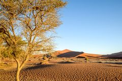 Panoramic view of red sand dunes in Sossusvlei near Sesriem in famous Namib Desert in Namibia, Africa. Sossusvlei is a popular tourist destination, the dunes royalty free stock photos